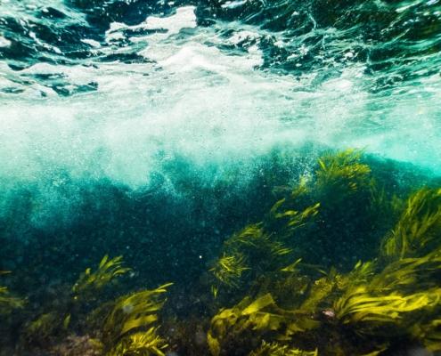 seaweed 001